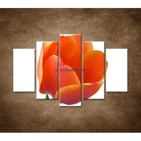 Obrazy na stenu - Tulipán - detail - 5dielny 150x100cm