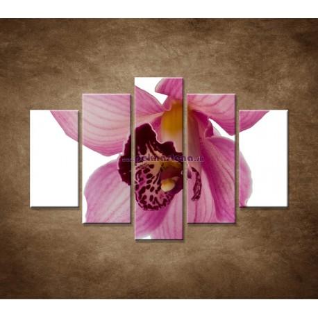 Obrazy na stenu - Orchidea - detail - 5dielny 150x100cm