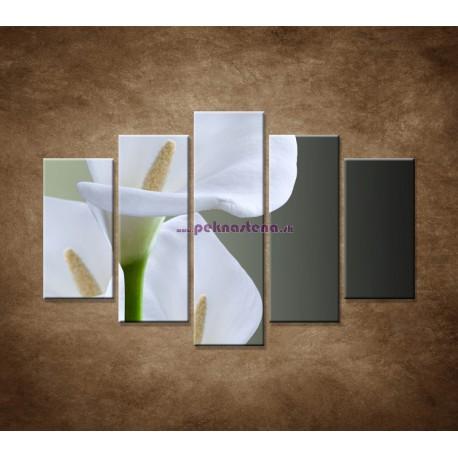 Obrazy na stenu - Tri biele kaly - 5dielny 150x100cm