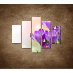 Obrazy na stenu - Krokusy - 5dielny 100x80cm