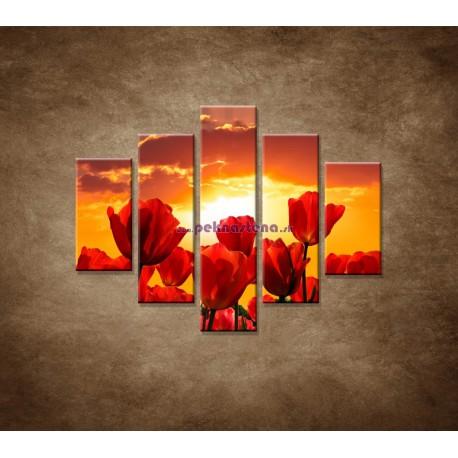 Obrazy na stenu - Západ slnka nad tulipánmi - 5dielny 100x80cm