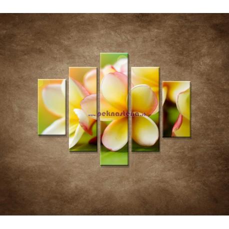 Obrazy na stenu - Žltá orchidea - 5dielny 100x80cm