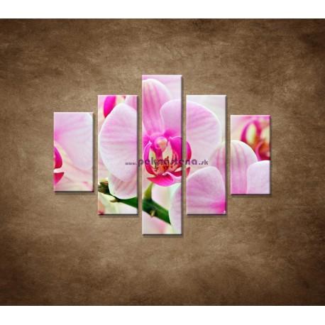 Obrazy na stenu - Ružová orchidea - 5dielny 100x80cm