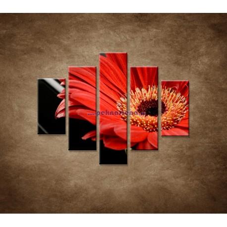 Obrazy na stenu - Gerbera - 5dielny 100x80cm
