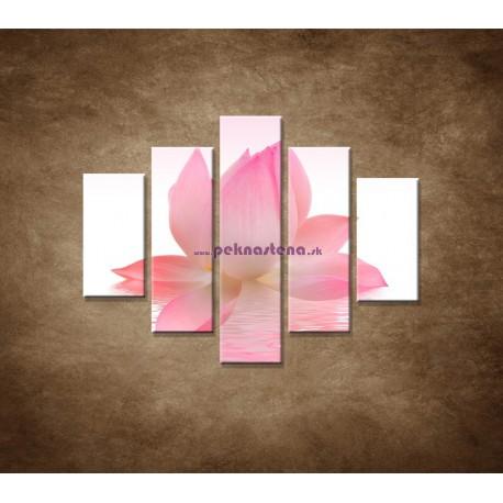 Obrazy na stenu - Lotosový kvet - 5dielny 100x80cm
