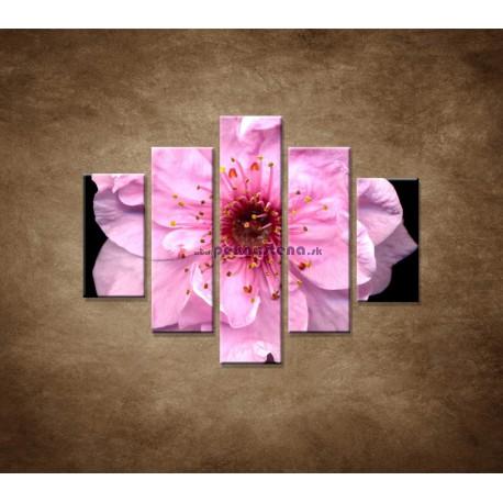 Obrazy na stenu - Kvet čerešne - 5dielny 100x80cm