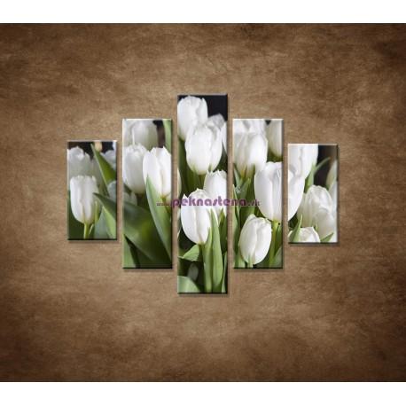 Obrazy na stenu - Biele tulipány - 5dielny 100x80cm