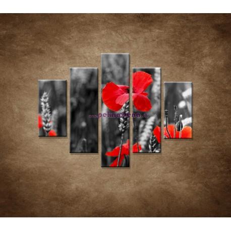 Obrazy na stenu - Červené vlčie maky - 5dielny 100x80cm