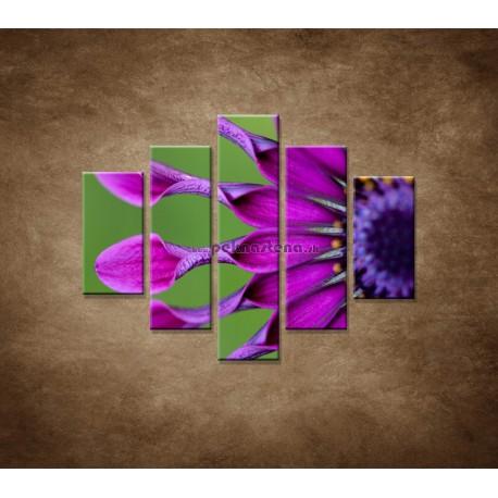 Obrazy na stenu - Tropický kvet - 5dielny 100x80cm