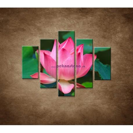 Obrazy na stenu - Lekno 2  - 5dielny 100x80cm