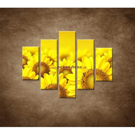 Obrazy na stenu - Lúka slnečníc - 5dielny 100x80cm