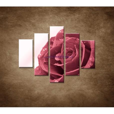 Obrazy na stenu - Ruža s rosou - 5dielny 100x80cm