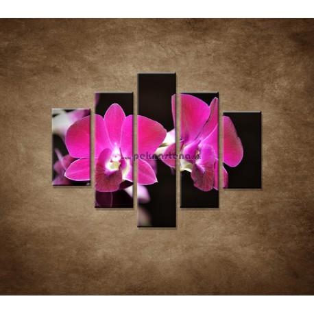 Obrazy na stenu - Ružová orchidea na čiernom pozadí - 5dielny 100x80cm