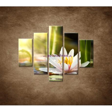Obrazy na stenu - Lekno - 5dielny 100x80cm