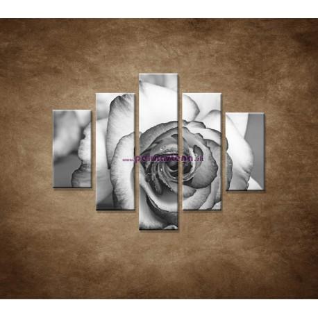 Obrazy na stenu - Ruža - 5dielny 100x80cm