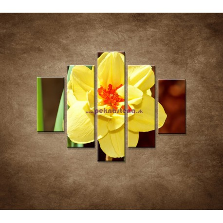 Obrazy na stenu - Narcis - detail - 5dielny 100x80cm