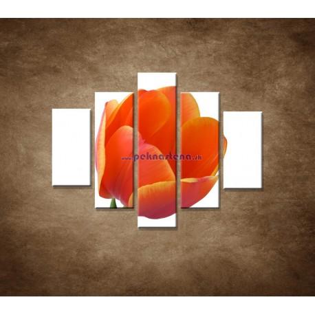Obrazy na stenu - Tulipán - detail - 5dielny 100x80cm