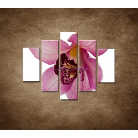 Obrazy na stenu - Orchidea - detail - 5dielny 100x80cm