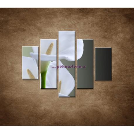 Obrazy na stenu - Tri biele kaly- 5dielny 100x80cm