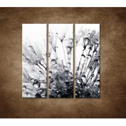 Obrazy na stenu - Makro - Rosa na púpave - 3dielny 90x90cm