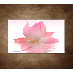 Lotosový kvet - 120x80cm - VÝPREDAJ!!!
