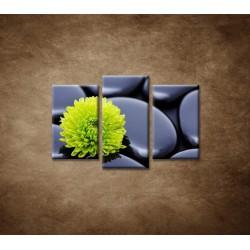 Obrazy na stenu - Žlto-zelený kvet - 3dielny 75x50cm