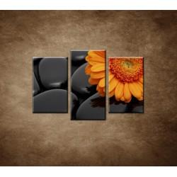Obrazy na stenu - Oranžová gerbera na kameňoch - 3dielny 75x50cm