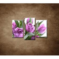 Obrazy na stenu - Nežné tulipány - 3dielny 75x50cm