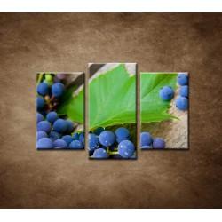 Obrazy na stenu - Modré hrozno - 3dielny 75x50cm