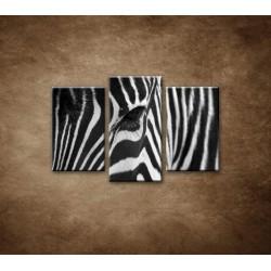 Obrazy na stenu - Zebra - oko - 3dielny 75x50cm