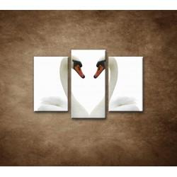 Obrazy na stenu - Labute - 3dielny 75x50cm