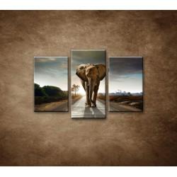 Obrazy na stenu - Slon - 3dielny 75x50cm