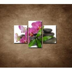 Obrazy na stenu - Orchidea na kameňoch - 3dielny 90x60cm