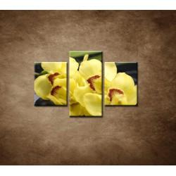 Obrazy na stenu - Žltá orchidea s kameňmi - 3dielny 90x60cm