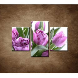 Obrazy na stenu - Nežné tulipány - 3dielny 90x60cm