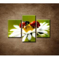 Obrazy na stenu - Lienky na kvete - 3dielny 90x60cm