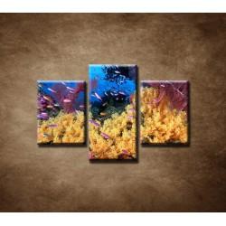 Obrazy na stenu - Korálový útes - 3dielny 90x60cm