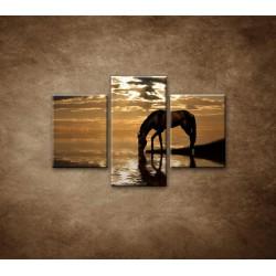 Obrazy na stenu - Kôň pri jazere - 3dielny 90x60cm