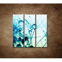 Obrazy na stenu - Kvapky vody na rastline - 3dielny 90x90cm