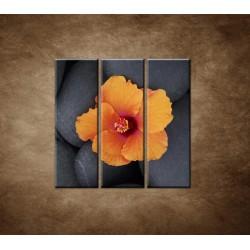 Obrazy na stenu - Oranžový ibištek na kameni - 3dielny 90x90cm