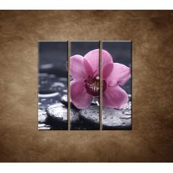 Obrazy na stenu - Ružová orchidea na kameni - 3dielny 90x90cm