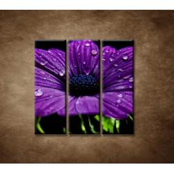 Obrazy na stenu - Fialový kvet - 3dielny 90x90cm