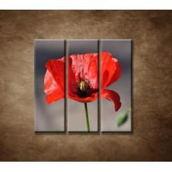 Obrazy na stenu - Vlčí mak - 3dielny 90x90cm