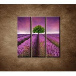 Obrazy na stenu - Levanduľové pole - 3dielny 90x90cm