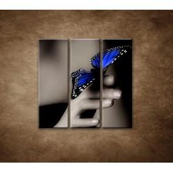 Obrazy na stenu - Modrý motýľ - 3dielny 90x90cm