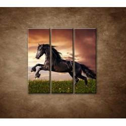 Obrazy na stenu - Čierny kôň - 3dielny 90x90cm