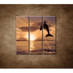 Obrazy na stenu - Skákajúci delfín - 3dielny 90x90cm