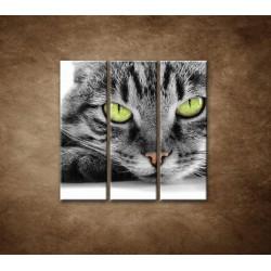 Obrazy na stenu - Mačací pohľad - 3dielny 90x90cm
