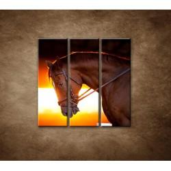 Obrazy na stenu - Kôň v stajni - 3dielny 90x90cm