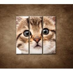 Obrazy na stenu - Mačiatko - 3dielny 90x90cm